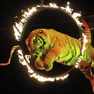 Цирки Сарапула